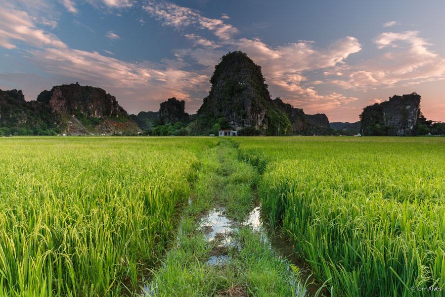 arrozal vietnã ninh binh