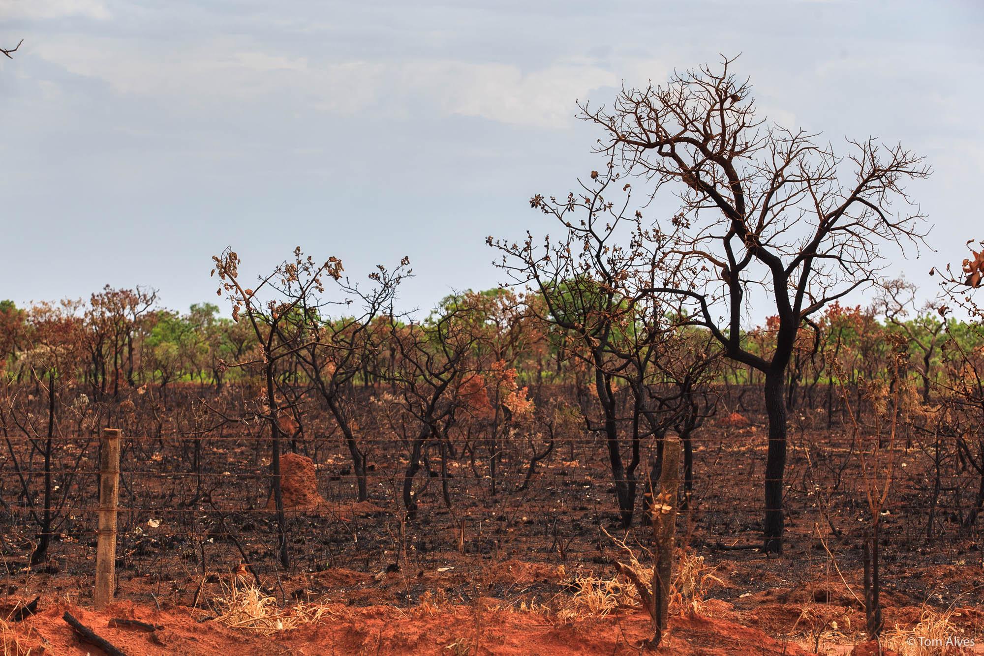 queimada-cerrado-parque das emas