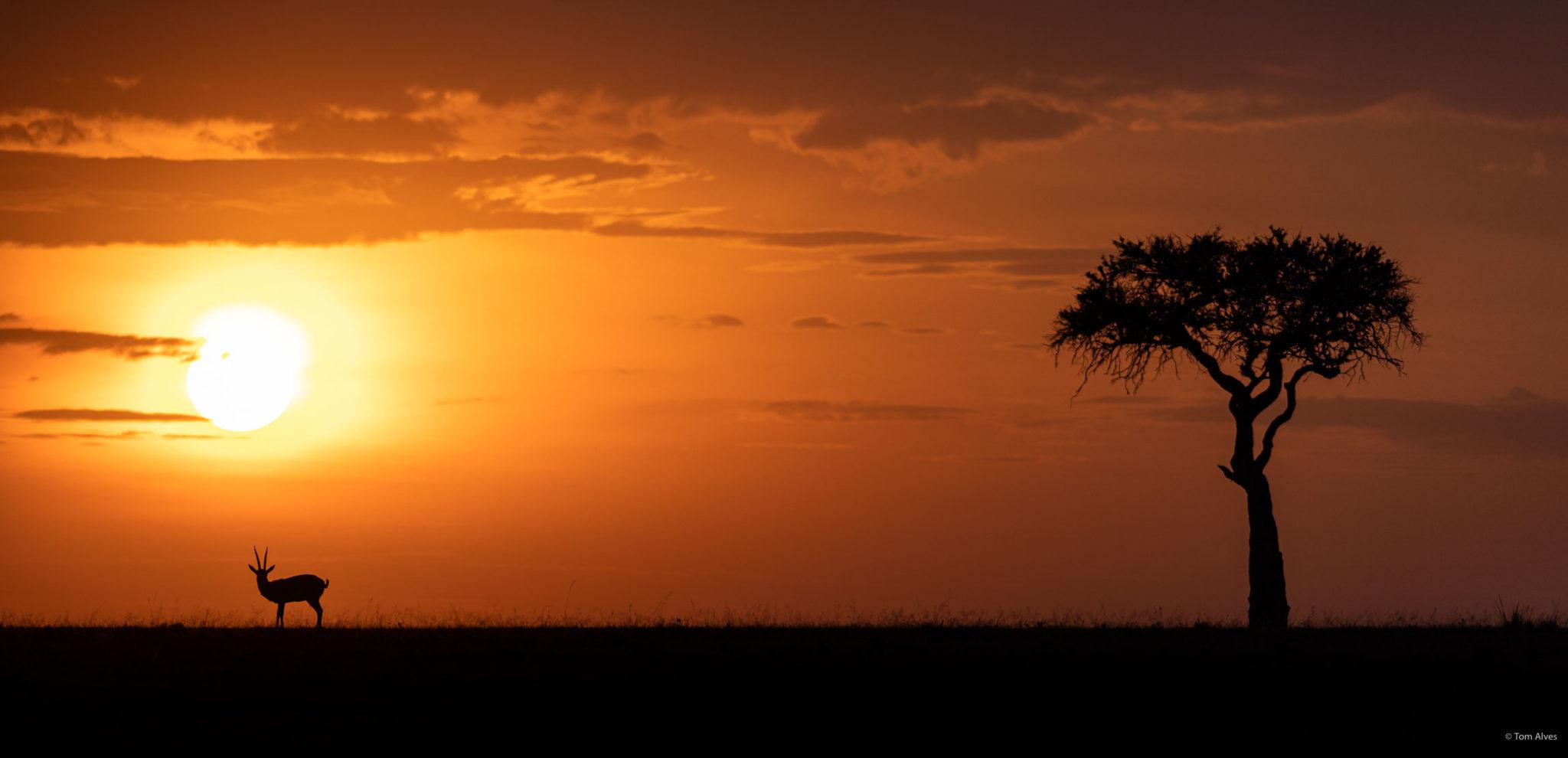por do sol masai mara