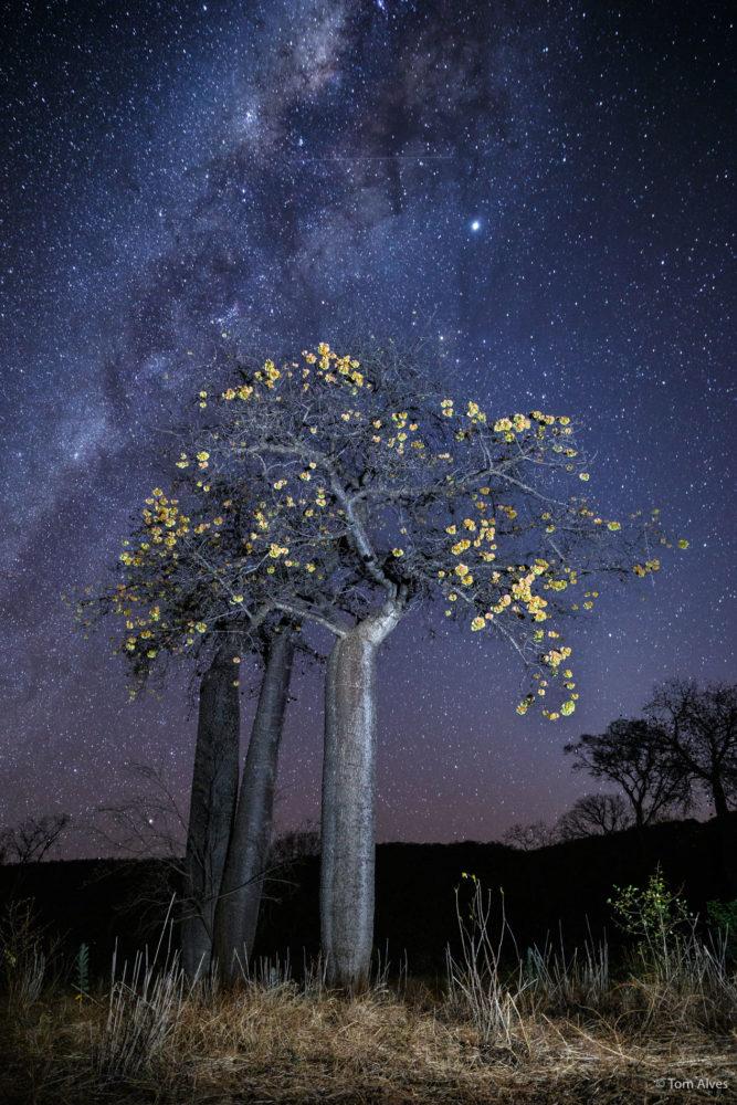 via láctea árvore