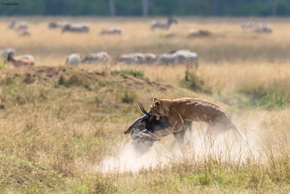 caçada em safari quenia